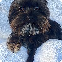 Adopt A Pet :: Emmit - Encino, CA