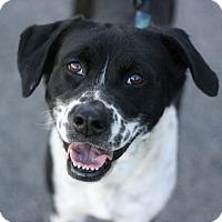 Adopt A Pet :: Pebbles - Canoga Park, CA