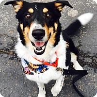 Adopt A Pet :: Colt - Christiana, TN