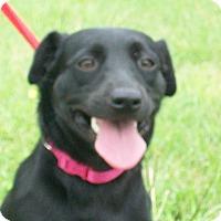 Adopt A Pet :: Jett - Mexia, TX