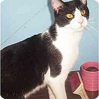 Adopt A Pet :: BO BO - Chapman Mills, Ottawa, ON