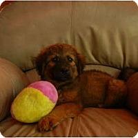 Adopt A Pet :: Booty Buns - Glastonbury, CT