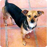 Adopt A Pet :: Bolta - Gilbert, AZ