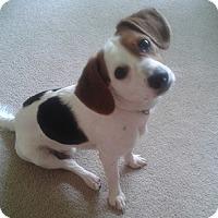 Adopt A Pet :: Denny - Hamilton, ON