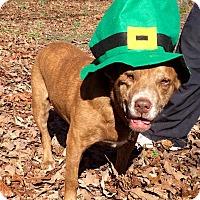 Adopt A Pet :: Gabriel - Tullahoma, TN