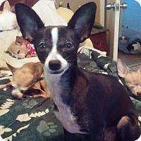 Adopt A Pet :: Carlotta - Brooksville, FL