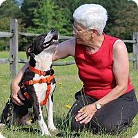 Adopt A Pet :: Bosco-Adopted! - Pinehurst, NC