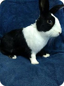 Other/Unknown Mix for adoption in Montclair, California - Penguin