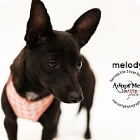 Adopt A Pet :: Melody - Aqua Dulce, CA