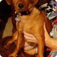 Adopt A Pet :: Ginger - Winder, GA