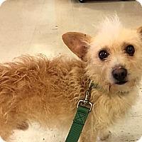 Adopt A Pet :: Skip *Pending* - Logan, UT