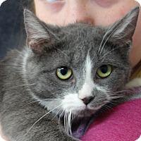 Adopt A Pet :: Kashmir - Greenfield, IN