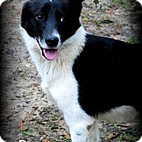 Adopt A Pet :: Blue - Vancleave, MS