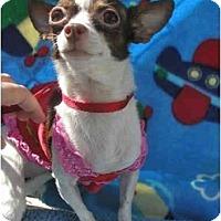 Adopt A Pet :: Gidget - Pembroke Pines, FL