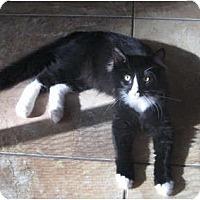 Adopt A Pet :: Cody - Palmdale, CA