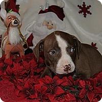Adopt A Pet :: Ringo - Costa Mesa, CA