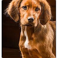Adopt A Pet :: Foreman - Owensboro, KY