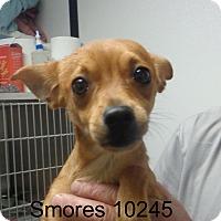 Adopt A Pet :: Smores - Greencastle, NC
