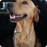 Adopt A Pet :: Clancy - Coppell, TX