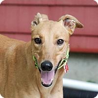 Adopt A Pet :: Gigi - Ware, MA