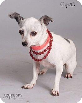 Chihuahua Mix Dog for adoption in Mesa, Arizona - Opal
