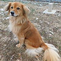 Adopt A Pet :: Zoe - Hedgesville, WV