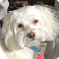 Adopt A Pet :: Gino and Freckles - Harrisonburg, VA
