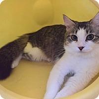 Adopt A Pet :: TRISHA - Raleigh, NC