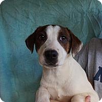 Adopt A Pet :: Fiji - Oviedo, FL