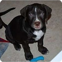 Adopt A Pet :: Ozzie - Minneola, FL
