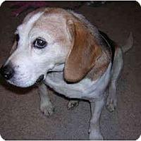 Adopt A Pet :: Logan-ADOPTED - Indianapolis, IN