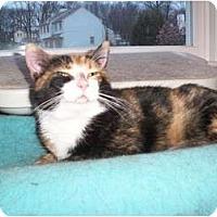 Adopt A Pet :: Candy - Jenkintown, PA