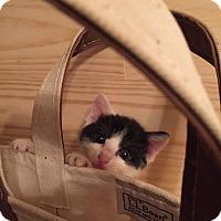 Adopt A Pet :: Whispurr - Piscataway, NJ