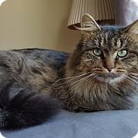 Adopt A Pet :: Jack - Mount Clemens, MI