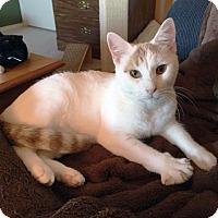 Adopt A Pet :: Garrett - Arlington/Ft Worth, TX
