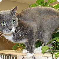 Adopt A Pet :: Ivy - Salisbury, NC