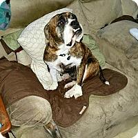 Adopt A Pet :: Maggie - Windermere, FL