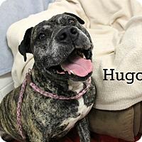 Adopt A Pet :: Hugo - Melbourne, KY