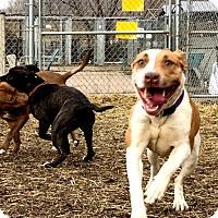 Adopt A Pet :: Bree - Cleveland, OH