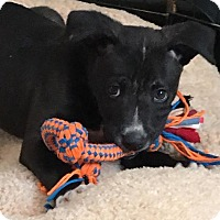 Adopt A Pet :: COLE - Portsmouth, NH