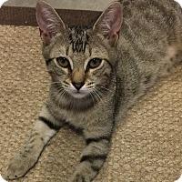 Adopt A Pet :: Tawny - Mt Pleasant, SC