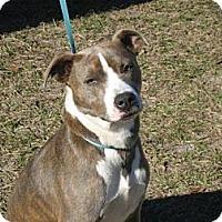 Adopt A Pet :: Isabella - Orange Lake, FL