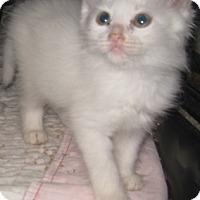 Adopt A Pet :: Magic - Dallas, TX