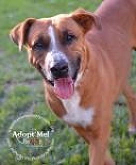 Shepherd (Unknown Type) Mix Dog for adoption in Miami, Florida - Harley
