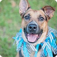 Adopt A Pet :: Boy - Kingwood, TX