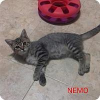 Adopt A Pet :: Nemo! - McDonough, GA