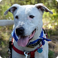 Adopt A Pet :: Beaux - Wimberley, TX