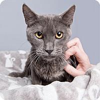 Adopt A Pet :: Jadeite - Wilmington, DE