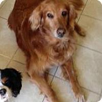 Adopt A Pet :: Maggie - Denver, CO