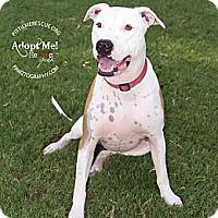 Adopt A Pet :: Georgio - Gilbert, AZ